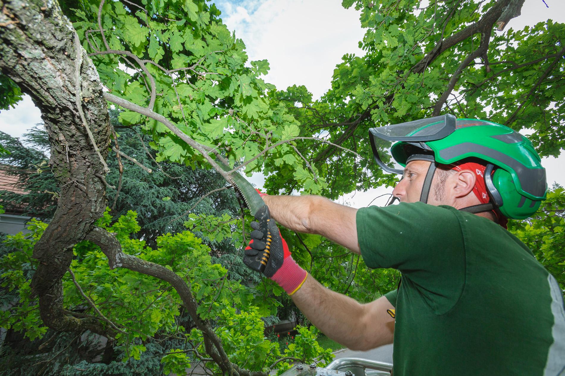 Sommer – die beste Zeit für Baumpflegearbeiten
