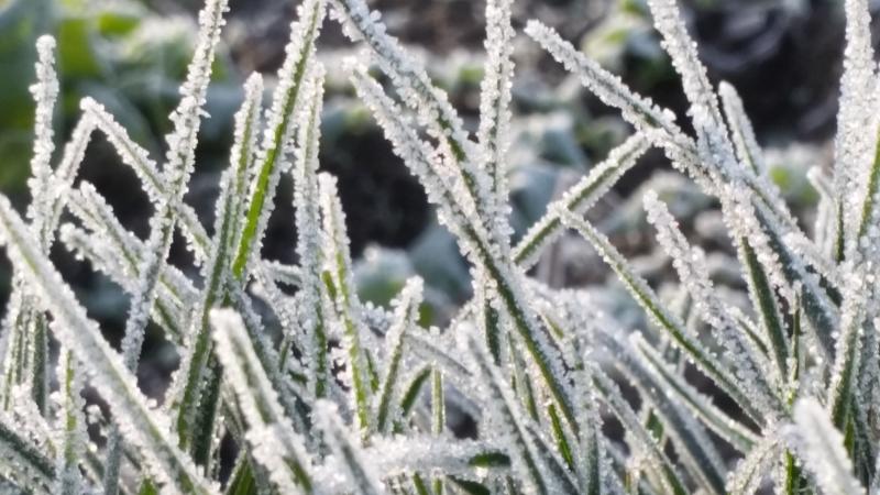 Winterbetrachtung Ihres Gartens