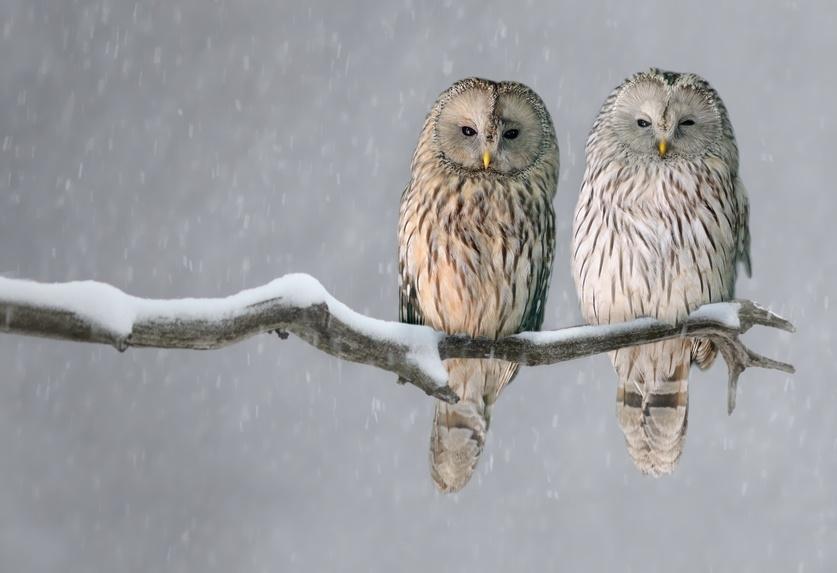 Wissenswertes über Fledermäuse, Eulen und Greifvögel