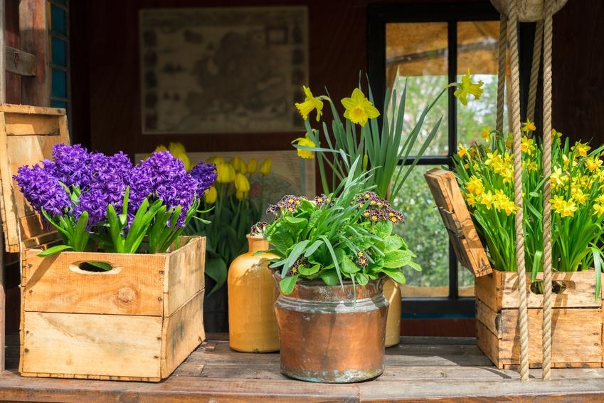 Frühlings Ankunft
