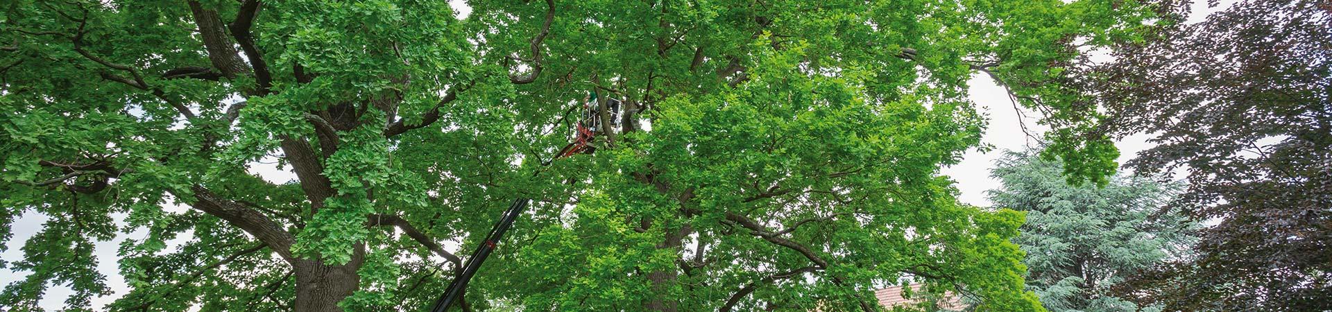 Baumpflege Kreitl